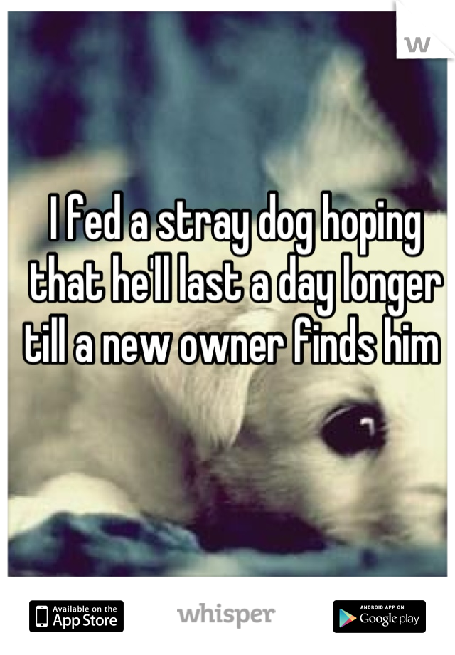 I fed a stray dog hoping that he'll last a day longer till a new owner finds him