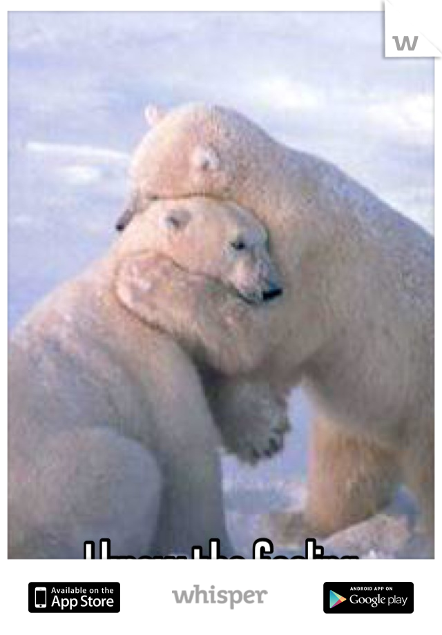 Polar bear hugging wolf