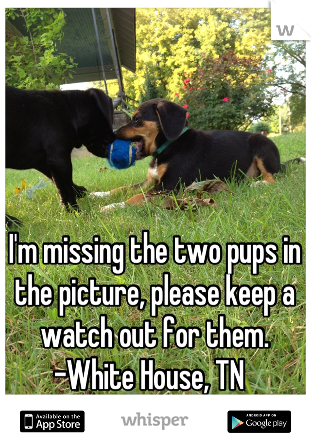 I'm missing the two pups in the picture, please keep a watch out for them.  -White House, TN