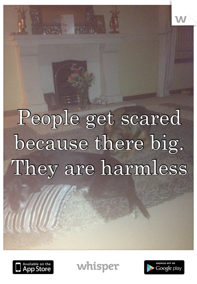 People get scared because there big. They are harmless
