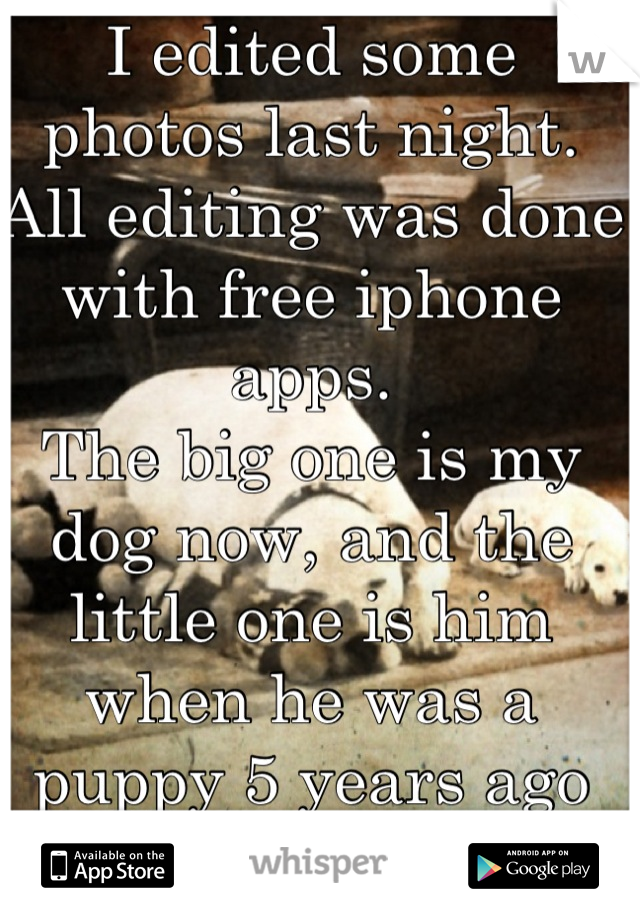 I edited some photos last night. All editing was done with free iphone apps.  The big one is my dog now, and the little one is him when he was a puppy 5 years ago  Do you like it?