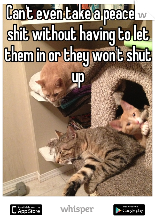Can't even take a peaceful shit without having to let them in or they won't shut up