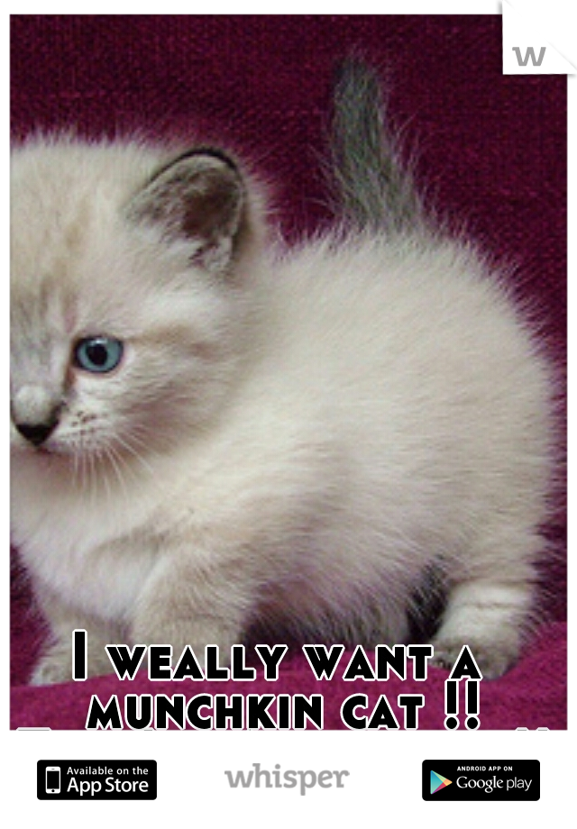 I weally want a munchkin cat !! They're Adowable !!