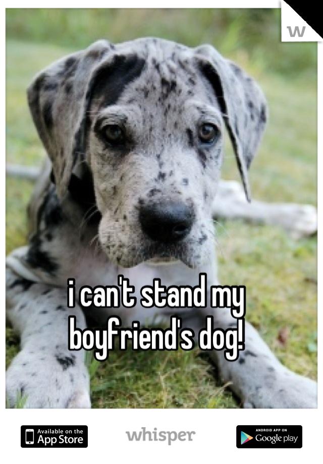 i can't stand my  boyfriend's dog!