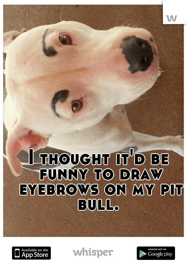 I thought it'd be funny to draw eyebrows on my pit bull.