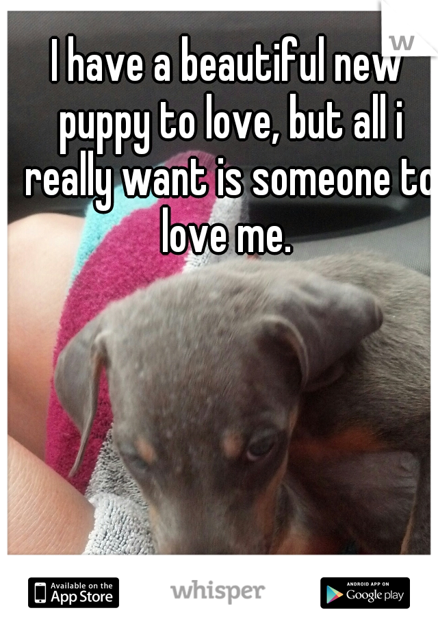 I have a beautiful new puppy to love, but all i really want is someone to love me.