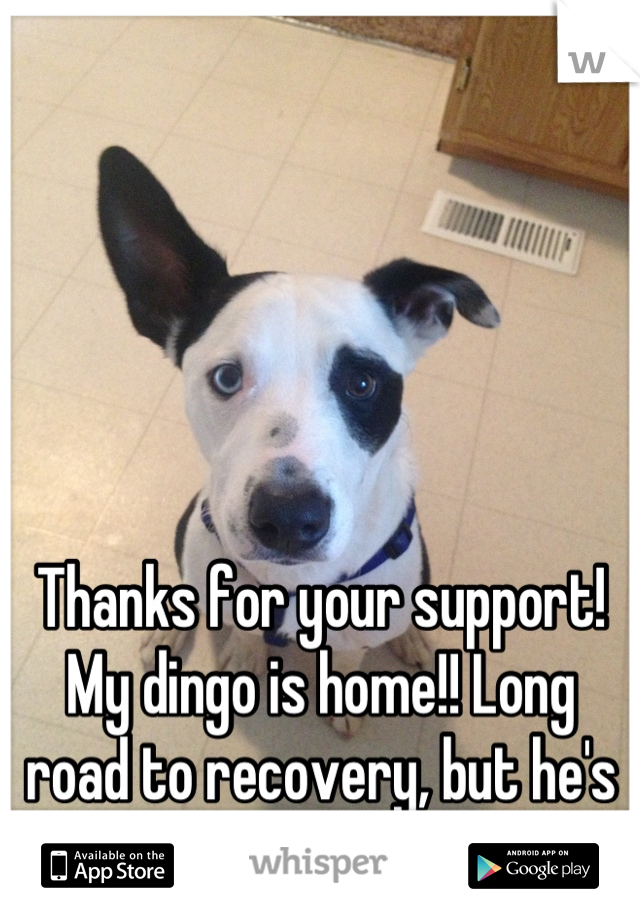 Thanks for your support! My dingo is home!! Long road to recovery, but he's home <3