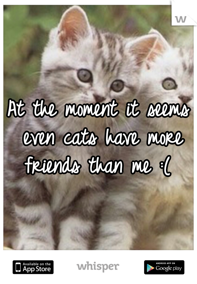 At the moment it seems even cats have more friends than me :(