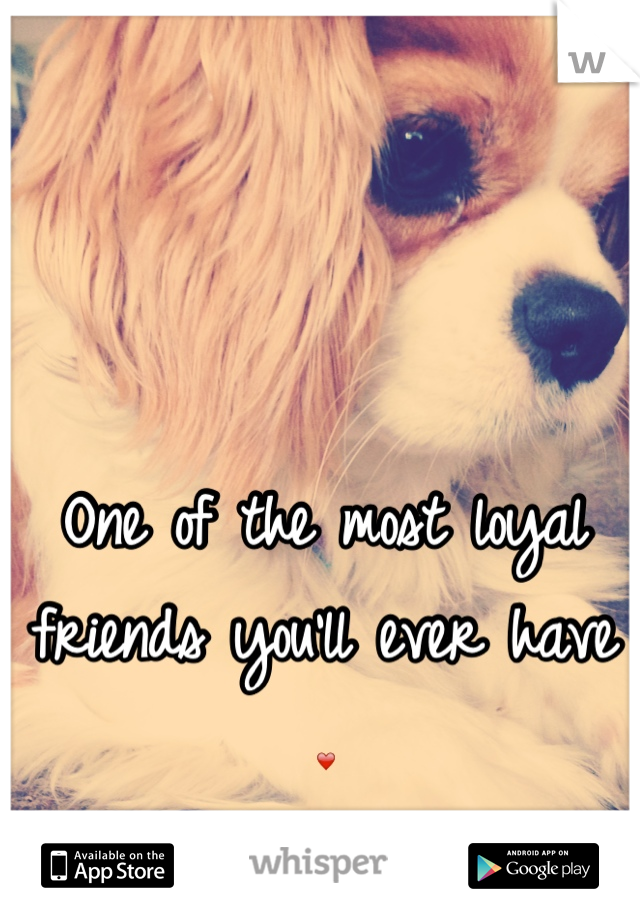 One of the most loyal friends you'll ever have ❤