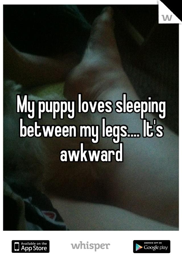 My puppy loves sleeping between my legs.... It's awkward