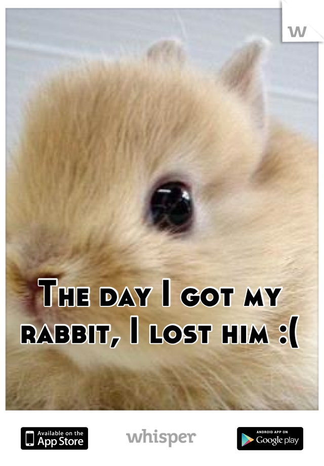 The day I got my rabbit, I lost him :(
