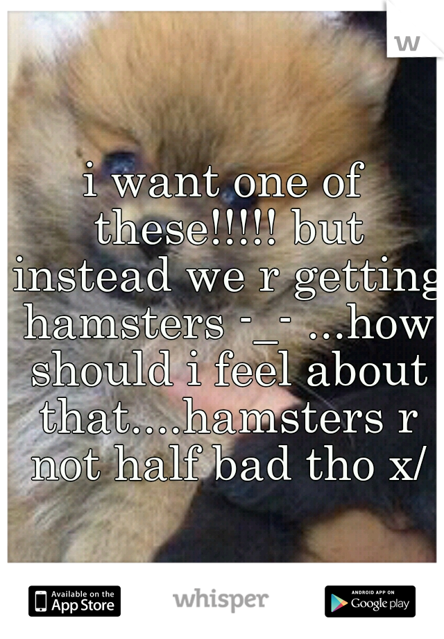 i want one of these!!!!! but instead we r getting hamsters -_- ...how should i feel about that....hamsters r not half bad tho x/