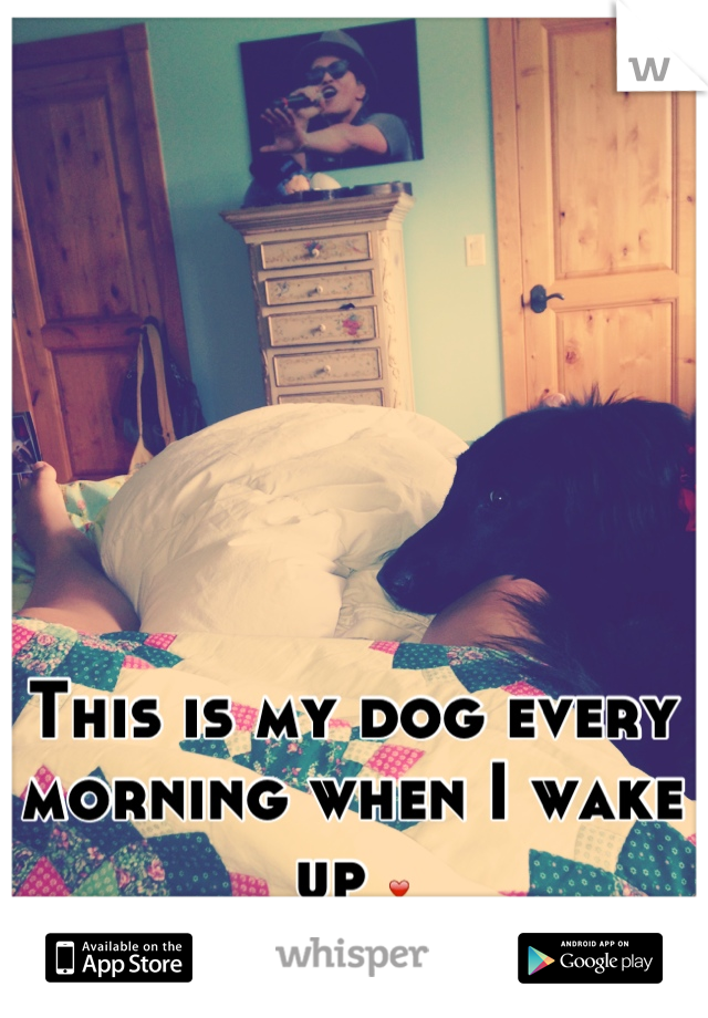 This is my dog every morning when I wake up ❤