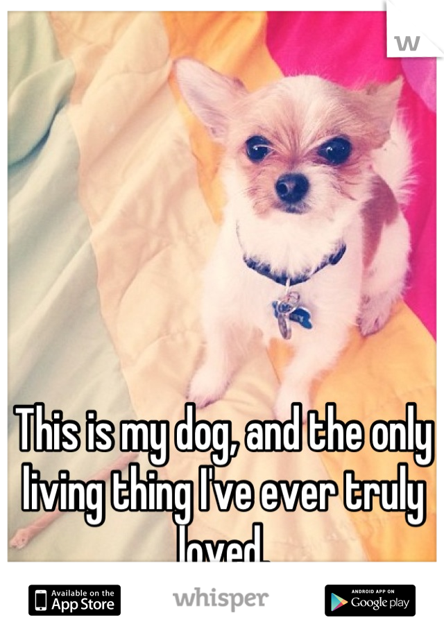 This is my dog, and the only living thing I've ever truly loved.