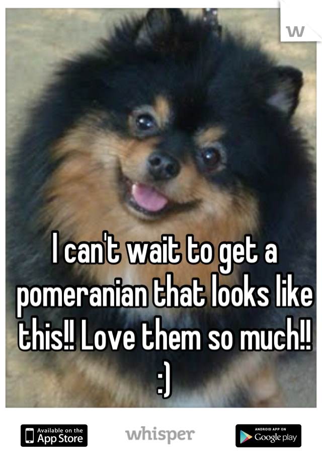 I can't wait to get a pomeranian that looks like this!! Love them so much!! :)
