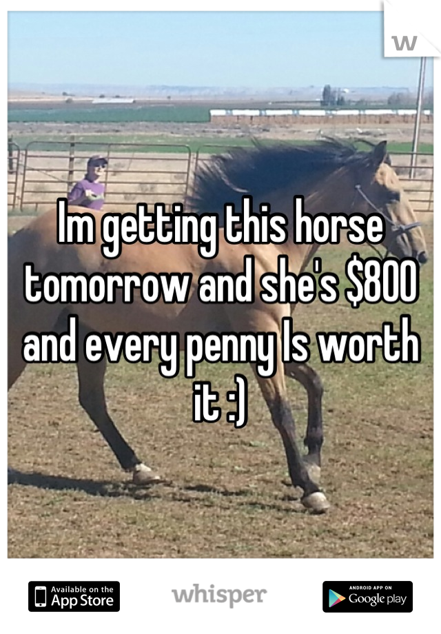 Im getting this horse tomorrow and she's $800 and every penny Is worth it :)