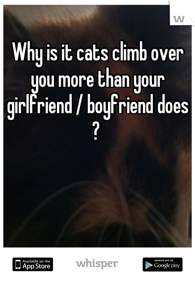 Why is it cats climb over you more than your girlfriend / boyfriend does ?