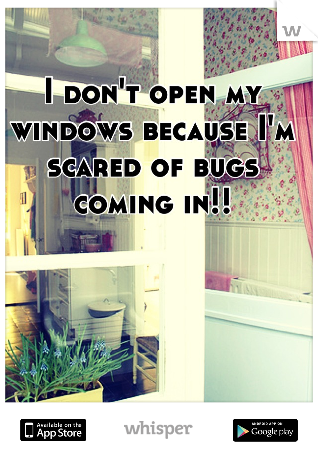 I don't open my windows because I'm scared of bugs coming in!!
