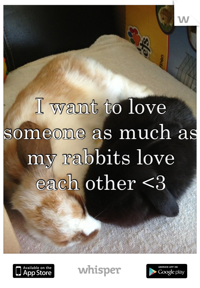 I want to love someone as much as my rabbits love each other <3
