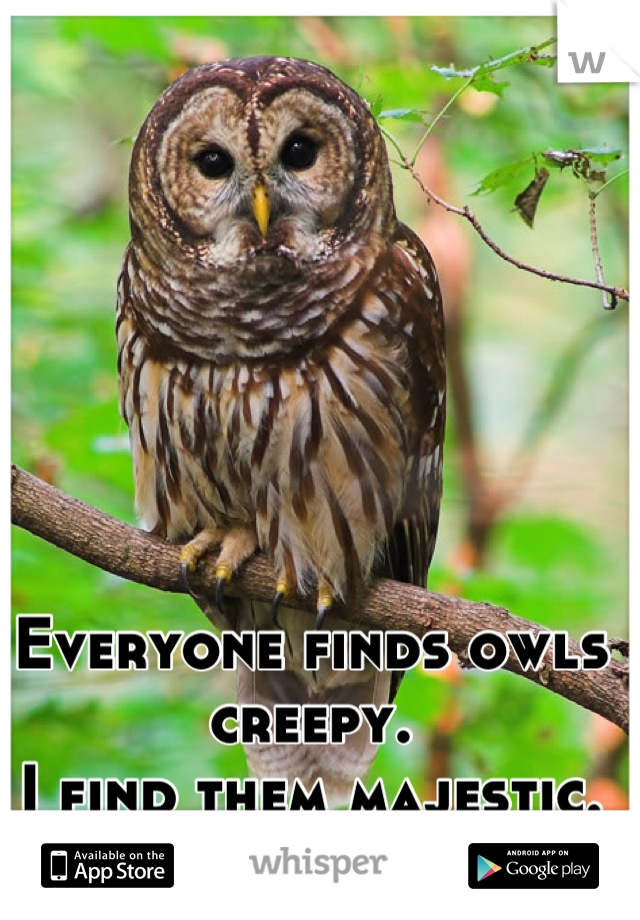 Everyone finds owls creepy. I find them majestic.