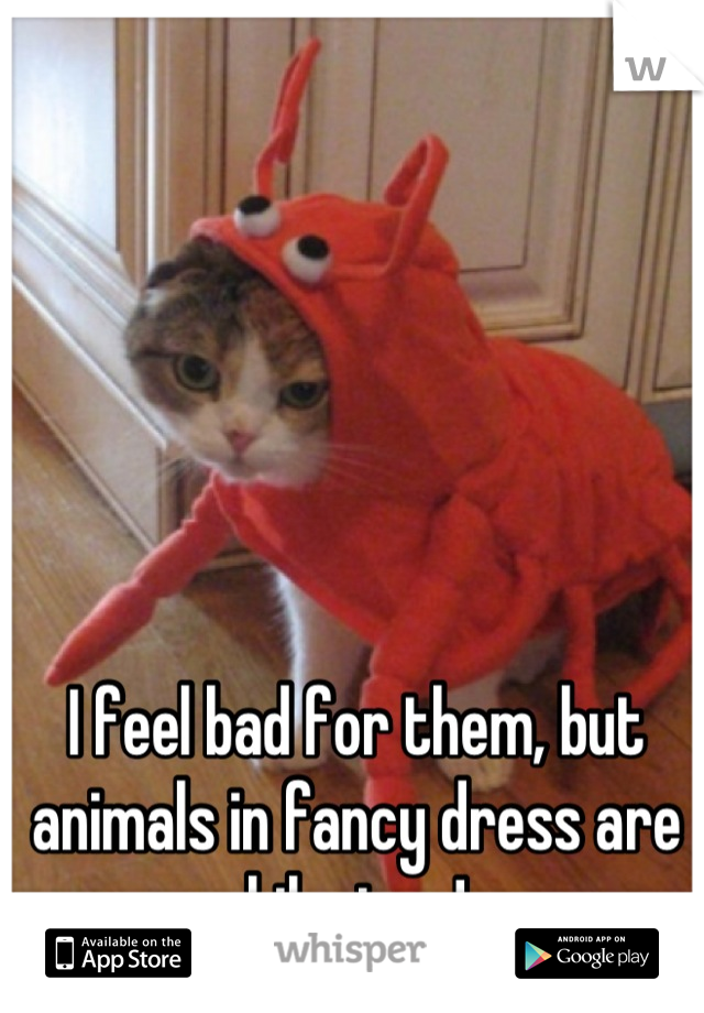 I feel bad for them, but animals in fancy dress are hilarious!