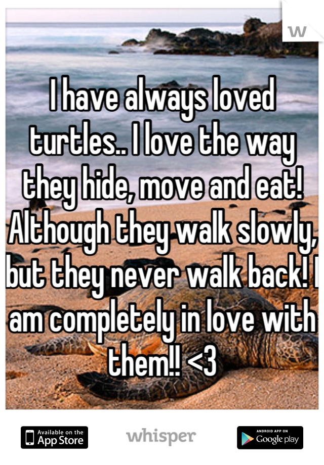 I have always loved turtles.. I love the way they hide, move and eat! Although they walk slowly, but they never walk back! I am completely in love with them!! <3
