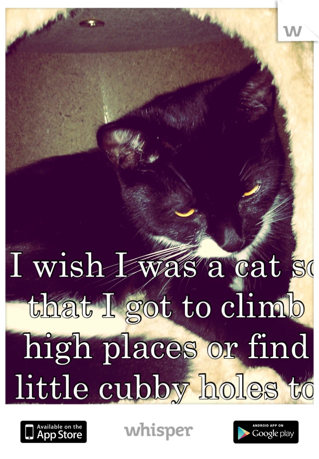 I wish I was a cat so that I got to climb high places or find little cubby holes to hide from humans...