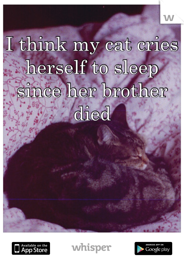 I think my cat cries herself to sleep since her brother died