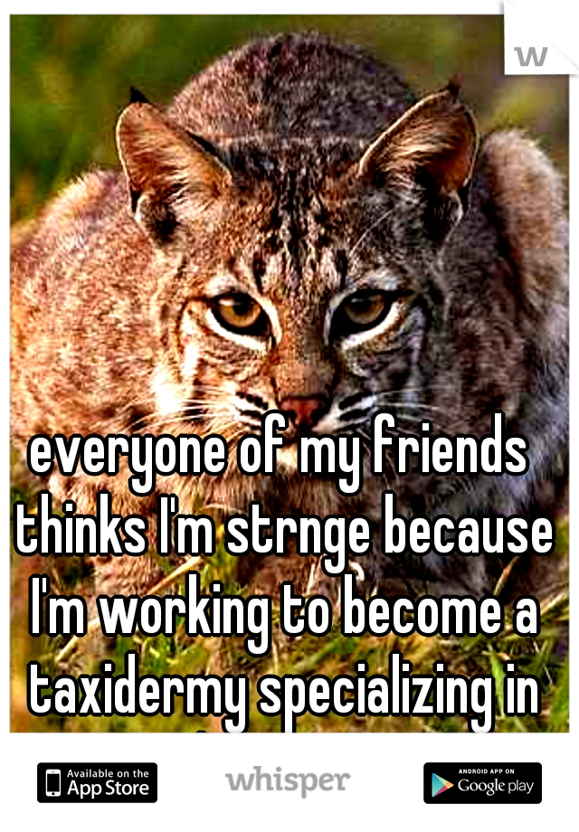 everyone of my friends thinks I'm strnge because I'm working to become a taxidermy specializing in predatory cats.