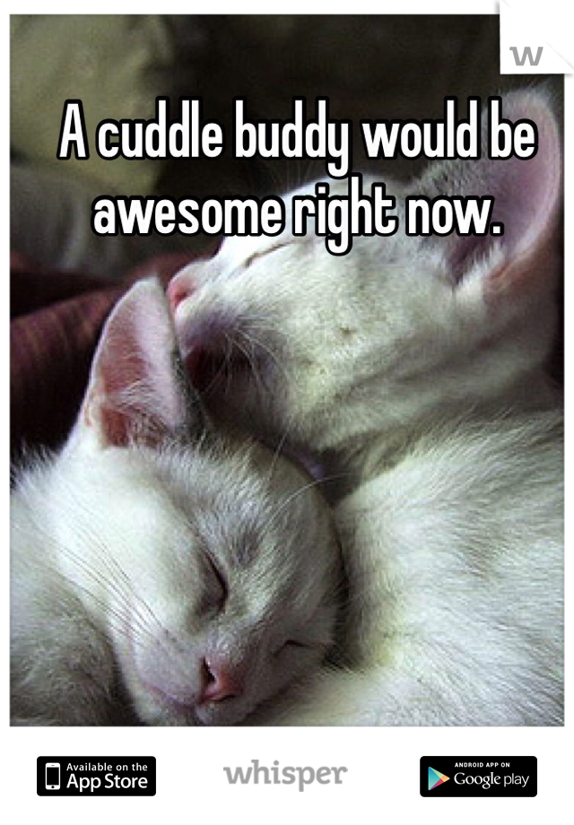 A cuddle buddy would be awesome right now.