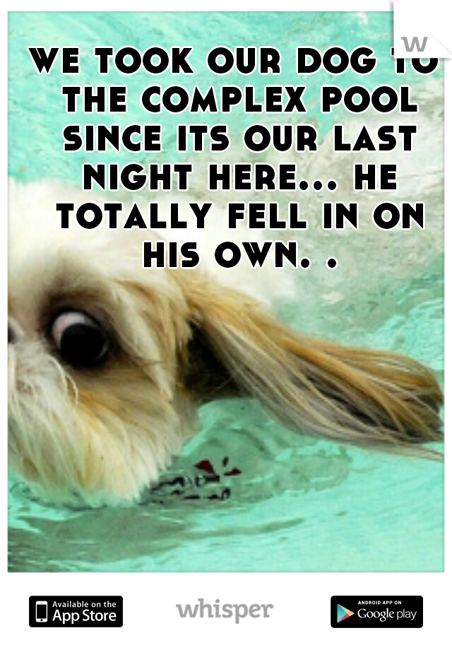 we took our dog to the complex pool since its our last night here... he totally fell in on his own. .