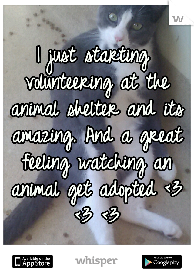I just starting volunteering at the animal shelter and its amazing. And a great feeling watching an animal get adopted <3 <3 <3