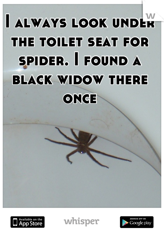 I always look under the toilet seat for spider. I found a black widow there once