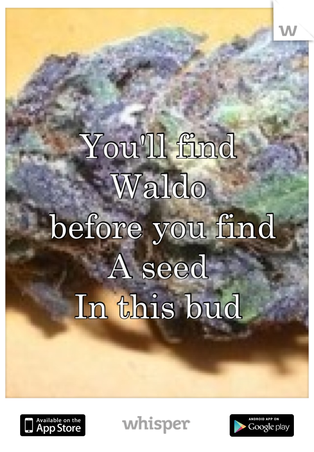 You'll find Waldo  before you find  A seed  In this bud