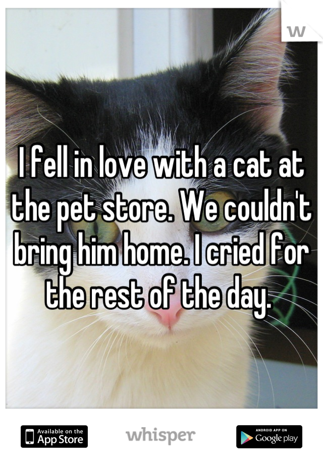 I fell in love with a cat at the pet store. We couldn't bring him home. I cried for the rest of the day.