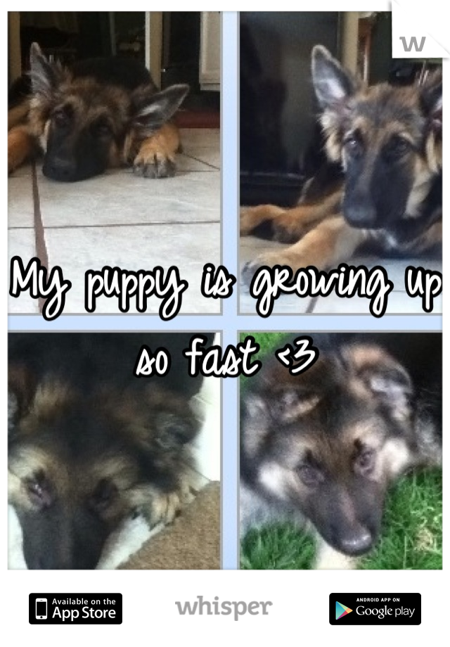 My puppy is growing up so fast <3