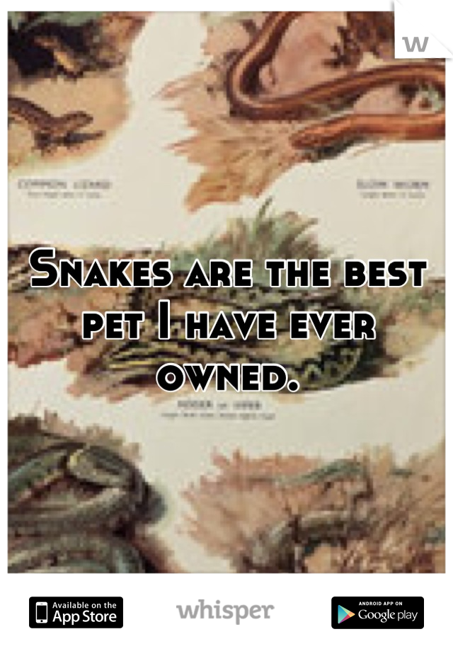 Snakes are the best pet I have ever owned.