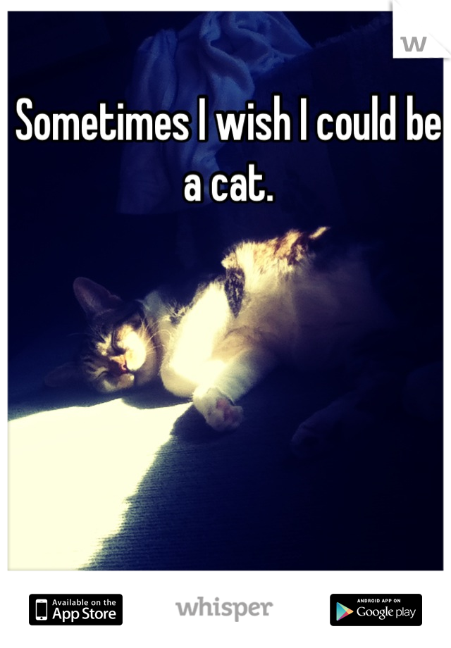Sometimes I wish I could be a cat.