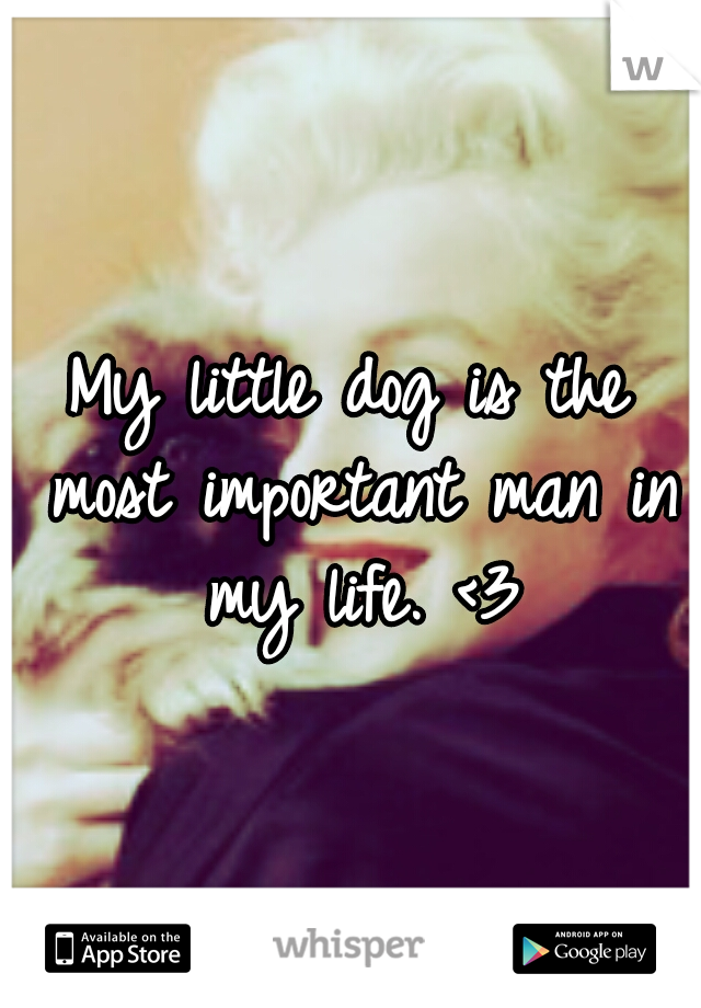 My little dog is the most important man in my life. <3