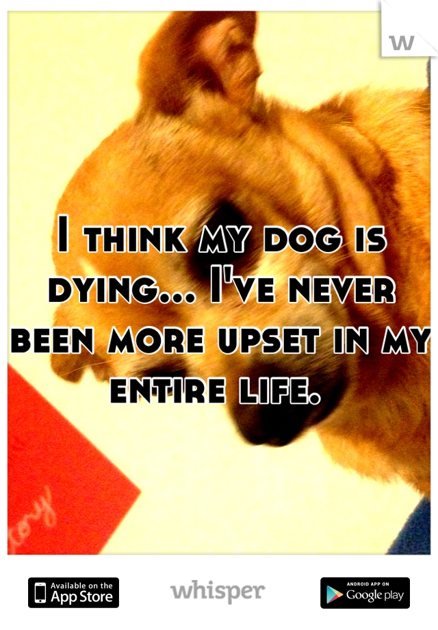 I think my dog is dying... I've never been more upset in my entire life.