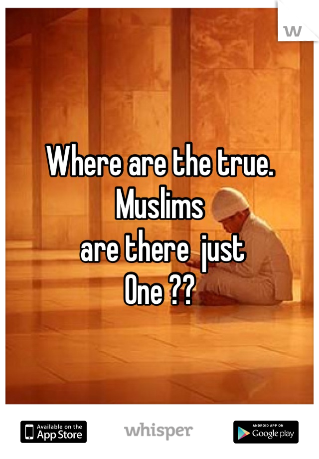 Where are the true.   Muslims   are there  just  One ??