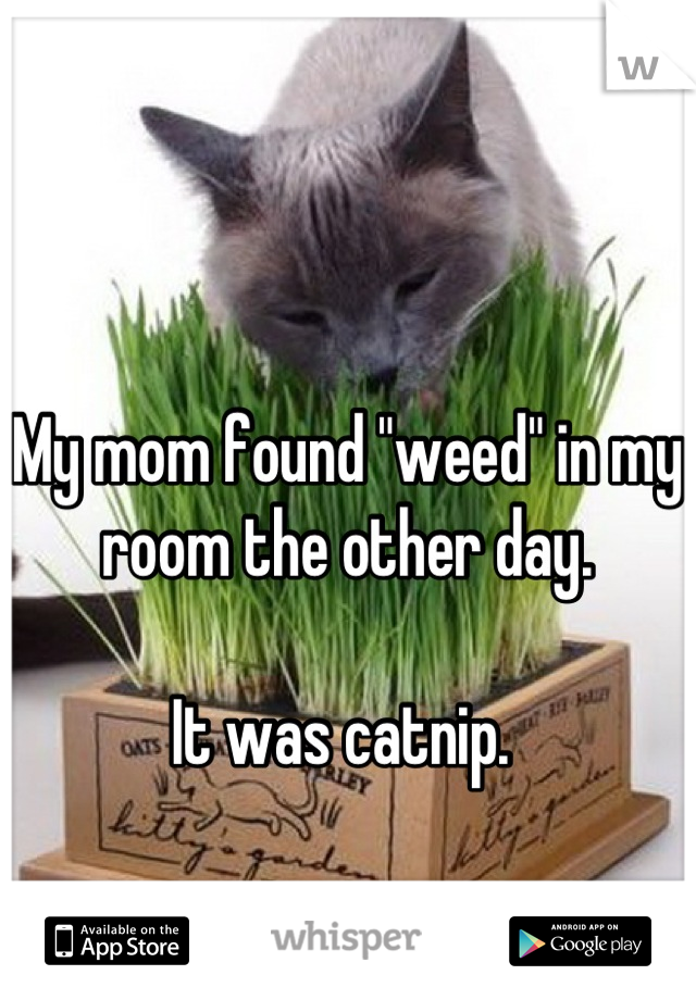 """My mom found """"weed"""" in my room the other day.   It was catnip."""