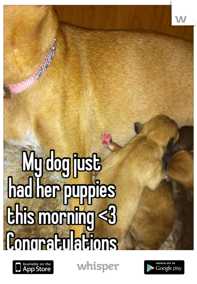 My dog just  had her puppies  this morning <3 Congratulations Jane & Tarzan (':
