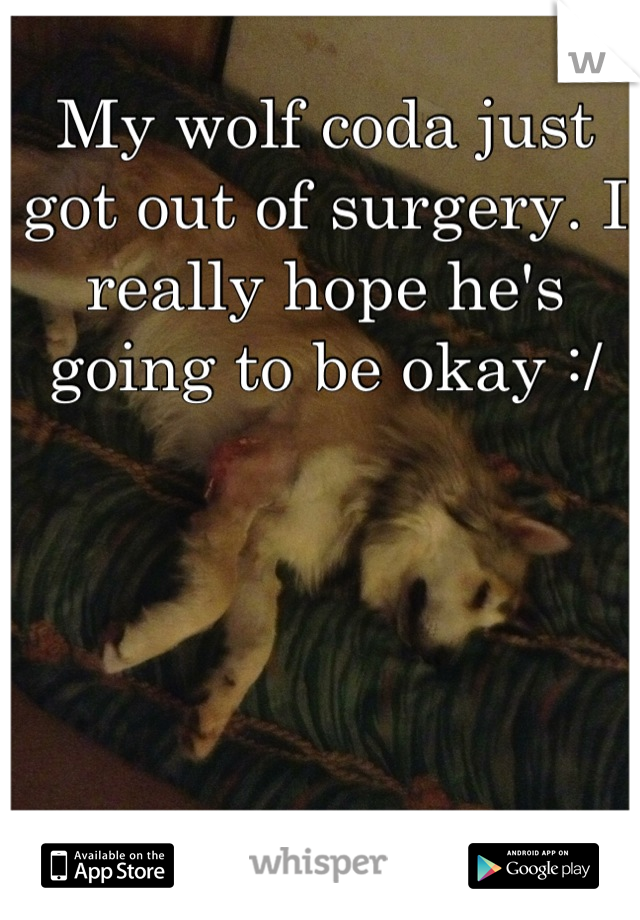 My wolf coda just got out of surgery. I really hope he's going to be okay :/