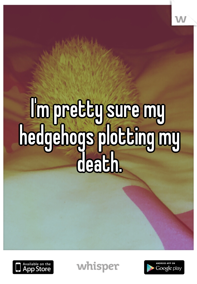 I'm pretty sure my hedgehogs plotting my death.