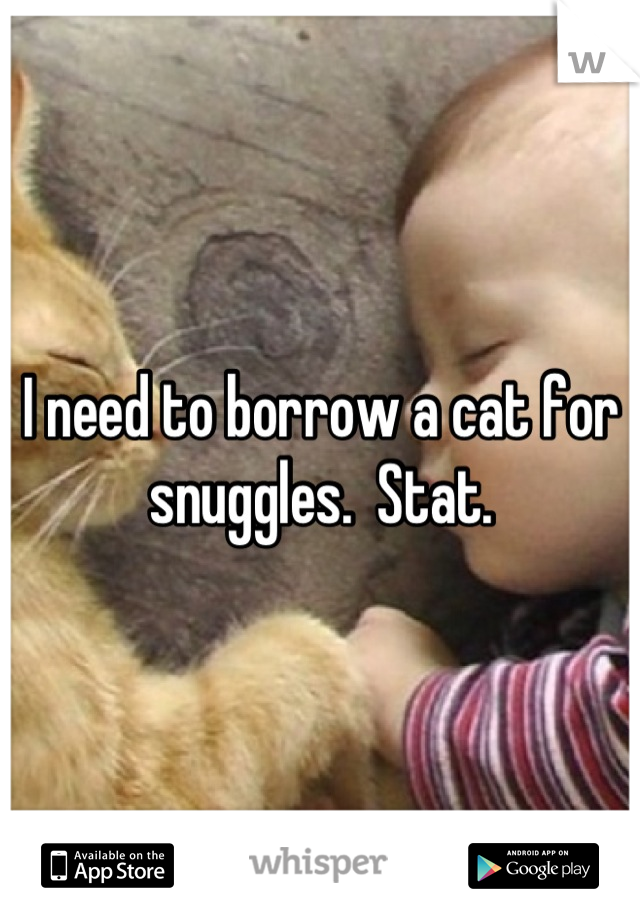 I need to borrow a cat for snuggles.  Stat.