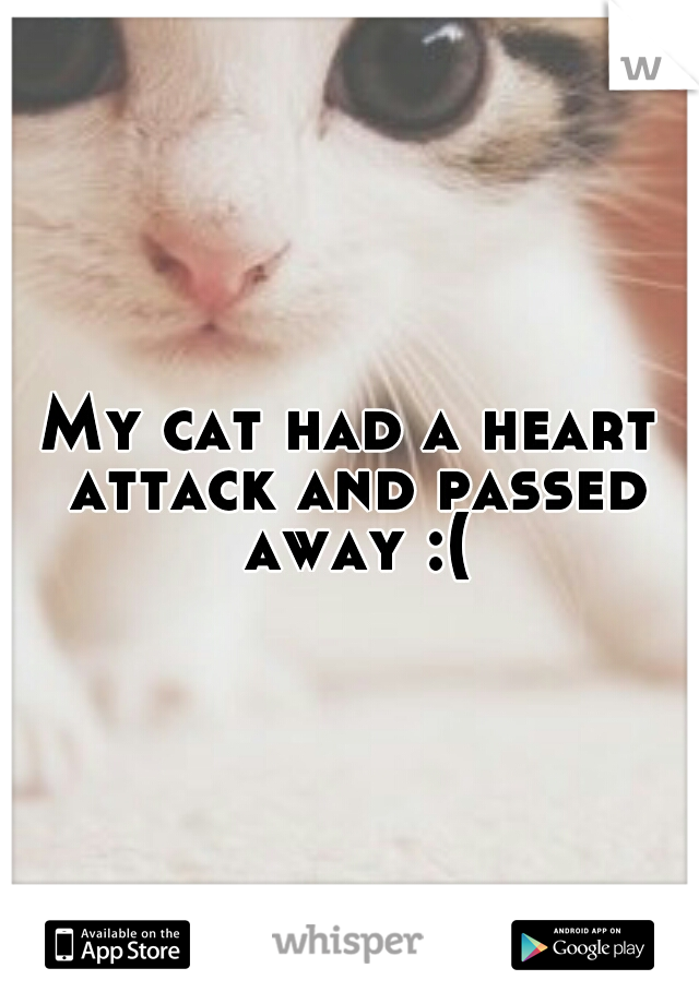 My cat had a heart attack and passed away :(