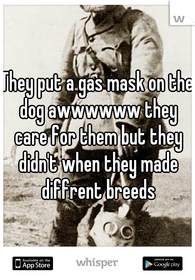 They put a gas mask on the dog awwwwww they care for them but they didn't when they made diffrent breeds