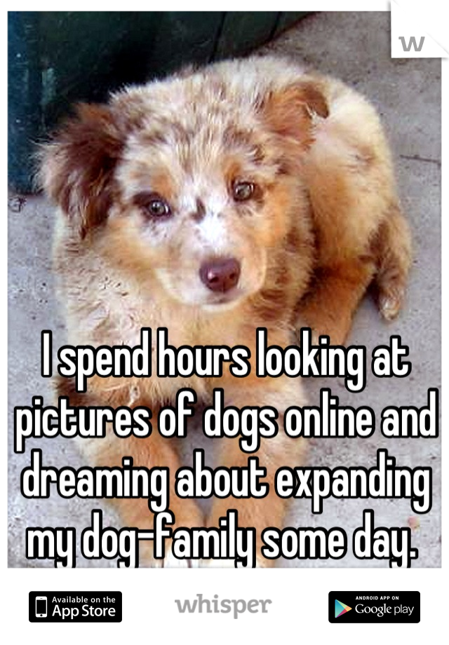 I spend hours looking at pictures of dogs online and dreaming about expanding my dog-family some day.