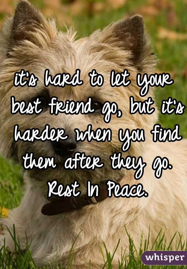it's hard to let your best friend go, but it's harder when you find them after they go. Rest In Peace.